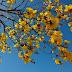 Primavera começa na segunda com temperaturas acima da média e pouca chuva na maior parte do país, diz Inmet
