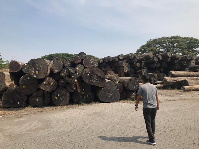 メルバオの大木