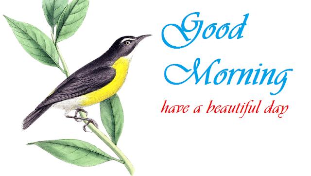 Beautiful good morning bird image