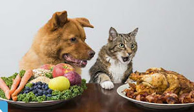 Cat and dog pets get special food
