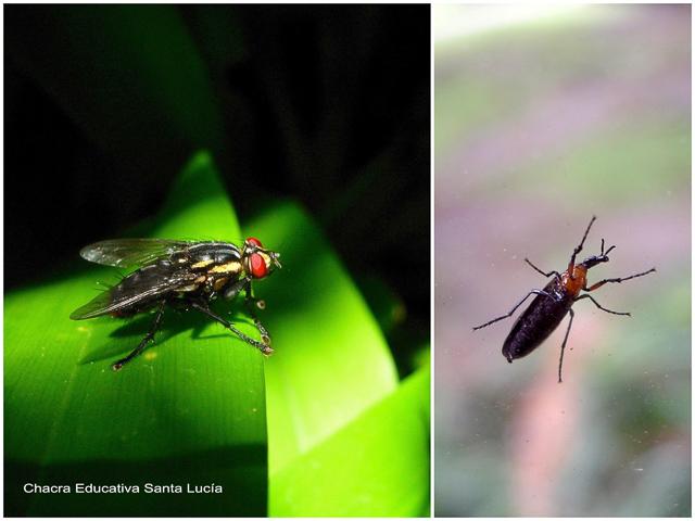 En un jardín se puede descubrir gran cantidad de insectos - Chacra Educativa Santa Lucía