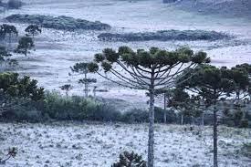 Simepar emite alerta de geada por vários dias no Paraná, temperaturas devem bater -5°C