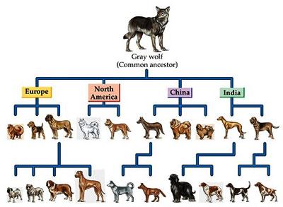 Petunjuk - Petunjuk Tentang Adanya Evolusi Interpretasi ...