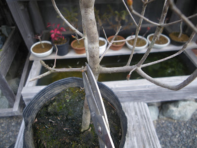 苗木 枯れた枝