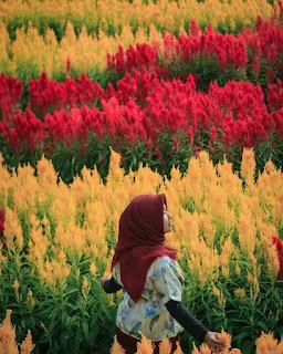 Lokasi Perengan Park Bantul, Spot Foto Taman Bunga
