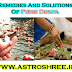 Remedies And Solutions Of Pitru Dosha