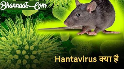 What Is Hanta Virus