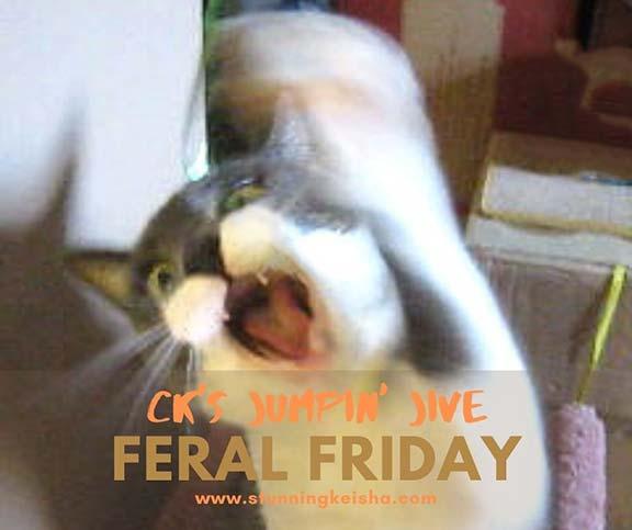 Feral Friday: CK's Jumpin' Jive
