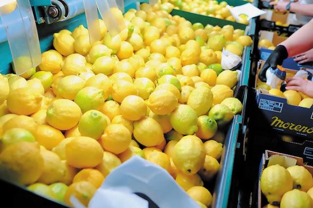 Σαρώνει το τούρκικο λεμόνι στην ελληνική αγορά - Έλλειψη ποσοτήτων και στην Αργολίδα για εξαγωγές