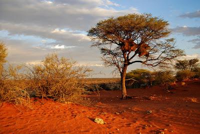 Terbentuknya Gurun Pasir di Bumi
