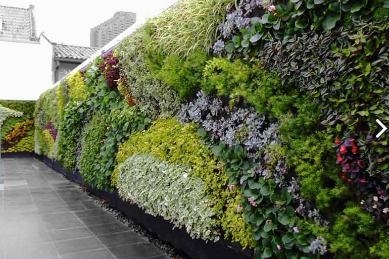 Jardines verticales reduciendo el di xido de carbono for Jardines verticales casa