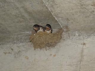 1羽飛び立ちました。残り2羽です。