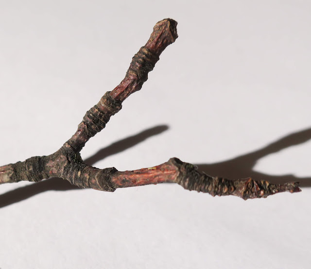 The other end of the twig - bark, wrinkles, colours, textures.
