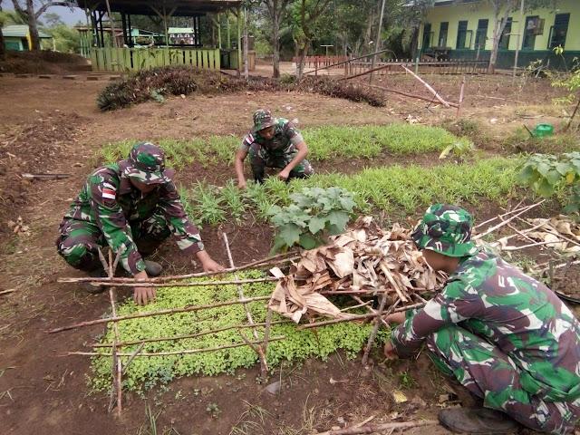 Prajurit Yonif MR 411 Pandawa di Perbatasan Manfaatkan Lahan Kosong Jadi Kebun Sayur