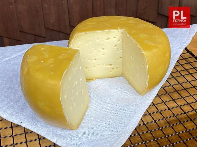 Havarti queso de sabor y textura suave y mantecosa, se madura recubierto en cera de abejas. Se puede encontrar en distintos sabores como son, natural, aceitunas verdes, cebollín