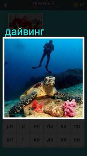 под водой ползет черепаха и сверху спускается аквалангист