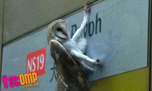 Celebrating Singapore's BioDiversity!: Harry Potter and ...