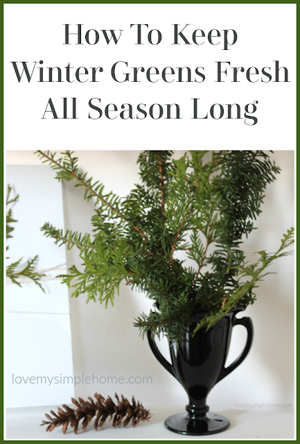 winter-greens-to-love-in-your-home-all-season-long-lovemysimplehome.com