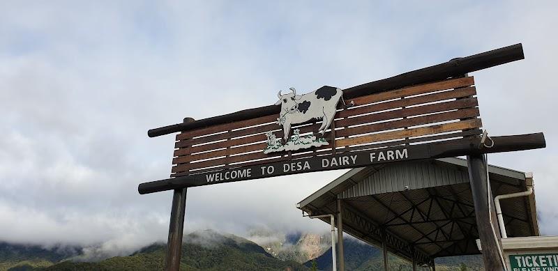 Jalan Jalan di Desa Dairy Farm Kundasang 2020