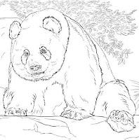 דובי פנדה לצביעה