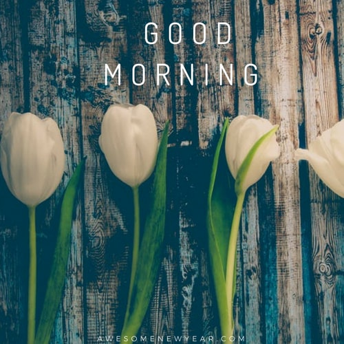20 Good Morning Images With Different Flowers For Whats app & Facebook