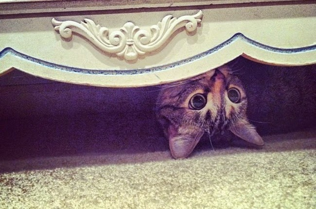 cats who mastered the art of hid and seek-3