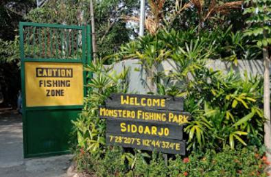 """Monstero Fishing Park - Berkunjung ke Sidoarjo rasanya tidak asik kalau tidak singgah ke Monstero Fishing Park, kolam pancing ikan monster sidoarjo paling yang mantap hinga saat ini.  Sensasi mancing ikan monster di Monstero Fishing Park sangat luar biasa, bayangkan saja kalian bisa tarik ikan monster yang beratnya 5 – 40 Kg dari dalam kolam Monstero Fishing Park ke darat.      Pemilik Monstero Fishing Park adalah Adrianta, pria yang sudah memperjuangkan Monstero Fishing Park hingga seiring berjalannya waktu semakin disukai banyak para mancing mania mengatakan """"Kalau ikan monster berhasil didapat para pemnacing harus dilepas kembali"""".  Tapi meskipun ikan di Monstero Fishing Park harus dilepas kembali tidak mengurangi niat pengunjung untuk tetap mencoba memancing ikan di Monstero Fishing Park harus ini karena yang paling utama ingin dirasakan oleh pengunjung adalah sensasi mendapatkan ikan dengan kail pancingannya.  Untuk memenuhi keinginan para pengunjungnya, Adrianta si pemilik Monstero Fishing Park menyediakan restoran ikan barkar dan tempat perteduhan lainnya khusus untuk digunakan oleh para pengujung mengolah ikan yang didapatkan.   Area lokasi Monstero Fishing Park yang penuh dengan taman yang dirancang dengan baik bagaikan tempat wisata keluarga pada umumnya membuat pengunjung merasa nyaman dan betah untuk berlama – lama berada di kolam pancing ikan monster Sidoarjo yang paling mantap ini.  Alamat Monstero Fishing Park   Penasaran dimana alamat Monstero Fishing Park ? tenang saja kawan, di artikel ini kami bagikan juga alamat Monstero Fishing Park buat kalian yang ingin memancing ikan monster di Monstero Fishing Park milik Adrianta ini.  Alamat Monstero Fishing Park  terletak di jalan Raya Lingkar Timur desa Gebang kecamatan Gebang  dan sedikit masuk ke wilayah Candi yang masih berdekatan dengan Buduran, Sidoarjo, Jawa Timur.  Lokasi Monstero Fishing Park ini sangat mudah untuk dijangkau jika kedatangan kalian dari pusat kota Sidoarjo dan Surabaya.   Jenis Ika"""