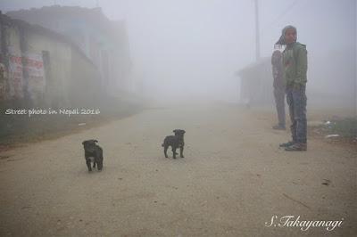 ネパールのキリ深い朝を子犬と散歩