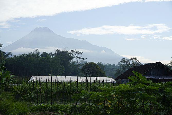 Gunung Merapi dan perkebunan subur