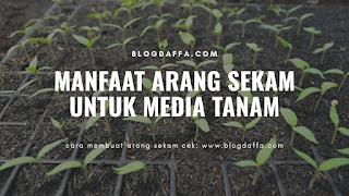 Manfaat Arang Sekam Untuk Media Tanam