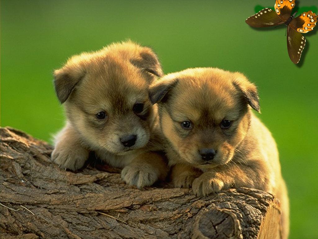 Animale essere inconsapevole storie pensieri e for Foto desktop animali