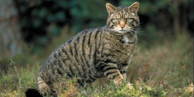 Wild Cats What To Do If They Live Around You Wild Cats What To Do If They Live Around You