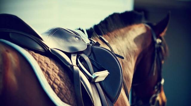 Szerelőaknába zuhant egy hatszáz kilós ló Hajdúdorogon