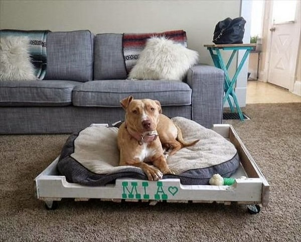 Cute Beds For Pets Combine With Interior Decoration Ideas 5
