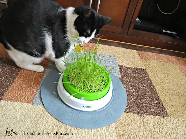 catit grass, cat grass, happy cat month