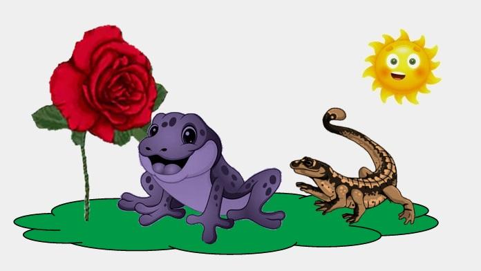 La rosa e il ranocchio - Anonimo