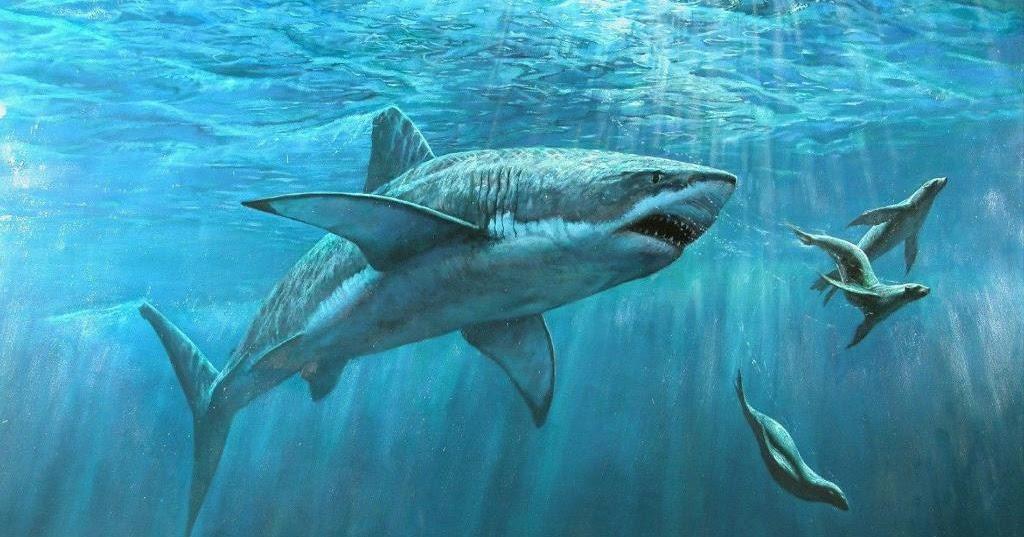 Gambar Ikan Hiu Keren Dalam Laut  Kumpulan Gambar