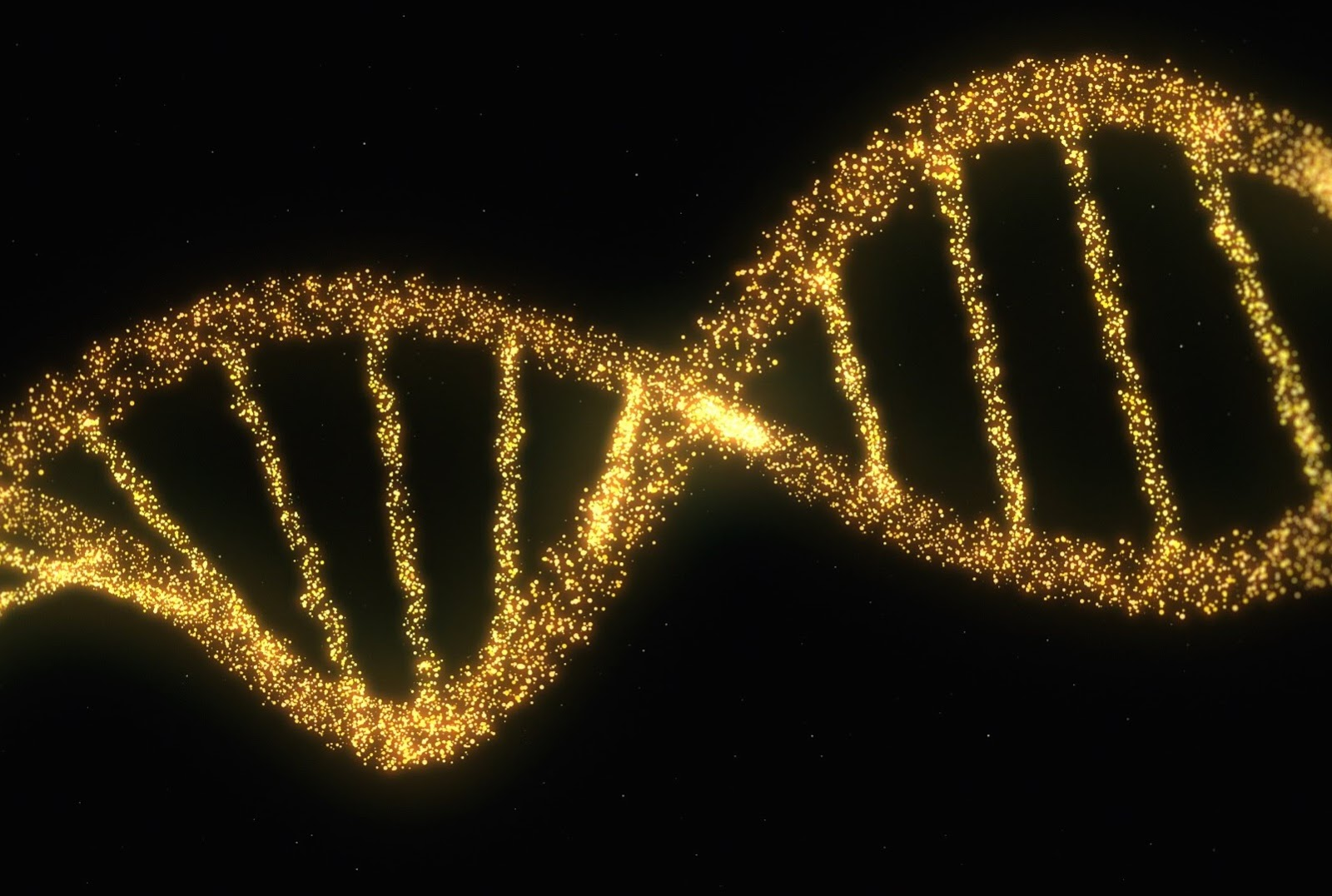 about the human genome The genome's been mapped but what does it mean arguably the most significant scientific discovery of the new century, the mapping of the twenty-three pairs of chromosomes that make up the human genome raises almost as many questions as it answers.