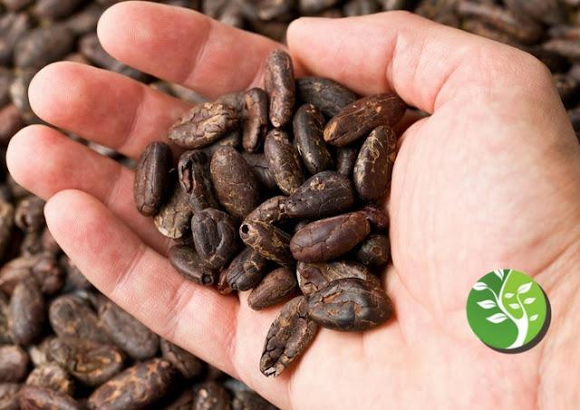 ¿Por qué deberías incluir el cacao en tu dieta?