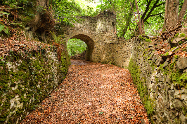 Culbone Wood trail under a stone bridge near Porlock by Martyn Ferry Photography
