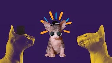 4 razas de gato sin pelo que no conocías