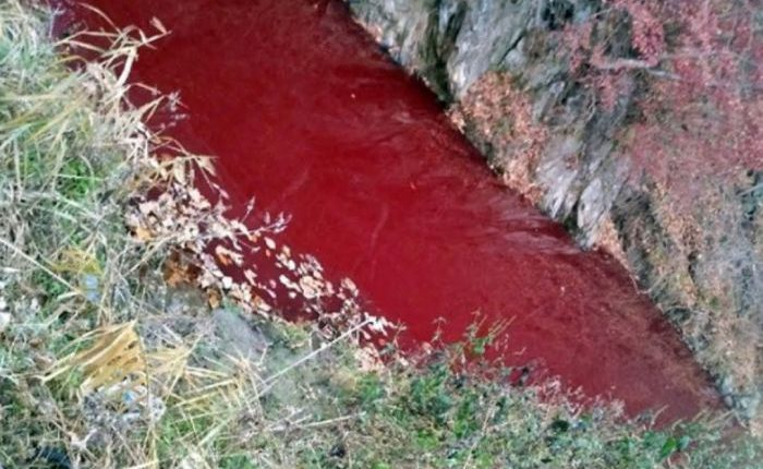 Sungai Di Korea Selatan Berubah Menjadi Merah
