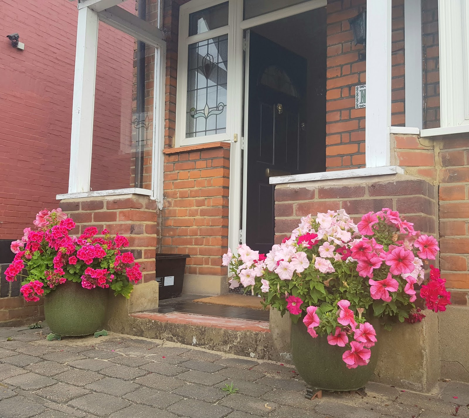 Colourful geraniums and begonias, London, July 2020