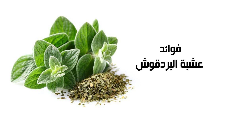نبتة البردقوش ومن أهم 10 فوائدها للنساء والرجال
