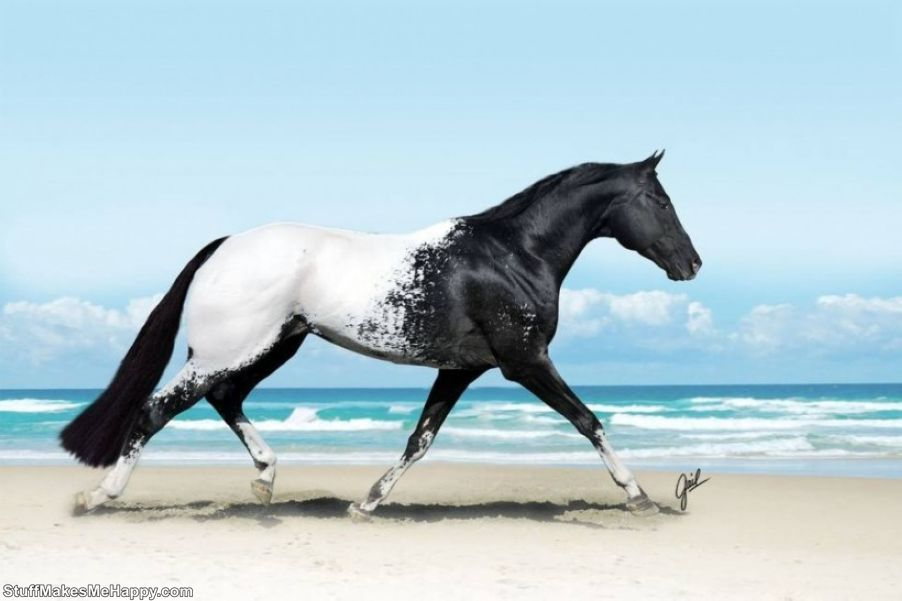 beautiful horse breeds