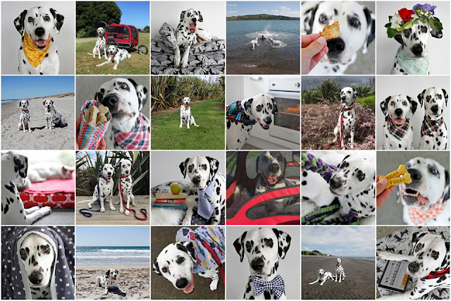 Photo collage with pictures of the blog dogs of Dalmatian DIY during 2019