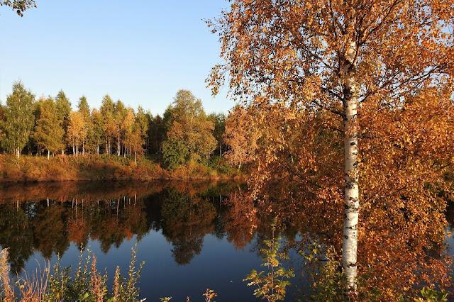 Pyhäjoki, ruska, koivut, joki, heijaste