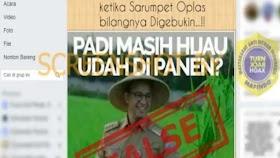 Foto Gubernur Anies Panen Padi Masih Hijau, Cek Faktanya