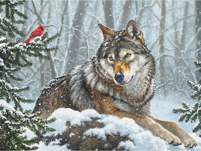 Wolf lying in snowy forest looking at red cardinal on tree