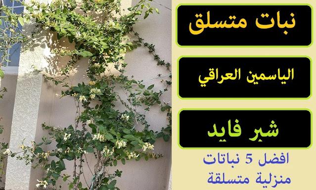"""""""أنواع النباتات المتسلقة في مصر"""" """"نباتات الظل المتسلقة"""" """"أنواع النباتات المتسلقة بالصور"""" """"زراعة المتسلقات في أحواض"""" """"نباتات متسلقة عطرية"""" """"نبات الفضية المتسلق"""" """"نباتات متسلقة دائمة الخضرة"""" """"نباتات متسلقة تتحمل الحرارة"""" """"نباتات زينة متسلقة"""" """"نباتات الزينة المتسلقة"""" """"نباتات زينة مزهرة"""" """"نباتات زينة ظلية"""" """"نباتات الزينة المزهرة"""" """"نباتات زينة للبلكونات"""" """"نباتات زينة سريعة النمو"""" """"نباتات زينة صناعية"""" """"نباتات زينة"""" """"نباتات الظل المتسلقة"""" """"نبات الزينه المتسلق"""" """"نباتات الزينة بالانجليزي"""" """"نباتات الزينة الصناعية"""" """"نباتات الزينة الخارجية المتسلقة"""" """"نباتات الزينة المعمرة"""" """"نباتات زينة مزهرة طوال العام"""" """"نبات زينة مزهرة"""" """"نباتات الزينة مزهرة"""" """"نباتات الزينة المزهرة بالصور"""" """"نباتات الزينة المزهرة في الشتاء"""" """"نباتات زينة داخلية مزهرة"""" """"نباتات زينة منزلية مزهرة"""" """"نباتات زينة خارجية مزهرة"""" """"نباتات زينة عطرية"""" """"نباتات الزينة الظلية"""" """"نباتات زينة ظل"""" """"نبات الزينة المزهرة"""" """"نباتات الظل المزهرة"""" """"انواع نباتات الزينة المزهرة"""" """"نباتات الزينة الداخلية المزهرة"""" """"نباتات زينة للبلكونة"""" """"نباتات الزينة للبلكونات"""" """"نباتات الزينة بلكونة"""" """"نباتات زينه بلاستيك"""" """"نباتات زينة الأنواع النموذجية"""" """"نباتات مزهرة طول العام"""" """"نباتات زينه صناعي"""" """"نبات زينة صناعي"""" """"نباتات زينة مائية"""" """"نباتات زينة خارجية"""" """"نباتات زينة داخلية"""" """"نباتات زينة خارجية تتحمل الحرارة"""" """"نباتات زينة تتحمل الملوحة"""" """"نباتات زينة منزلية"""" """"نباتات زينة تتحمل العطش"""" """"نباتات زينة خارجية دائمة الخضرة"""" """"نباتات الزينة doc"""" """"نباتات الزينة en francais"""" """"تسميد نباتات الزينة npk"""" """"نباتات زينة pdf"""" """"نباتات الزينة pdf"""" """"نباتات الزينة ppt"""" """"النباتات الزينة pdf"""" """"كتب نباتات زينة pdf"""" """"نباتات الزينة الخارجية pdf"""" """"أطلس نباتات الزينة pdf"""" """"إكثار نباتات الزينة pdf"""" """"نبات الظل المتسلق"""" """"نباتات ظل متسلقة"""" """"نباتات الظل واسمائها"""" """"نباتات الظل والصوب"""" """"نباتات الظل المنزلية"""" """"نبات ظل متسلق"""" """"نبات الاسيجة"""" """"نبات الكليفيا"""" """"نبات السرسوع"""" """"نبات للزينة"""" """"نبات زينة متسلق"""" """"نباتات الزينه المتسلقه"""" """"نباتات زينة بالانجليزية"""" """"نباتات زينة بالانجليزي"""" """"نبات زينة بالانجليزي"""" """"نباتات الظل بالانجليزي"""" """"نباتات الزينة انجليزي"""" """"اسماء نباتات الزينة بالانجليزي"""" """"ترجمة نباتات ال"""